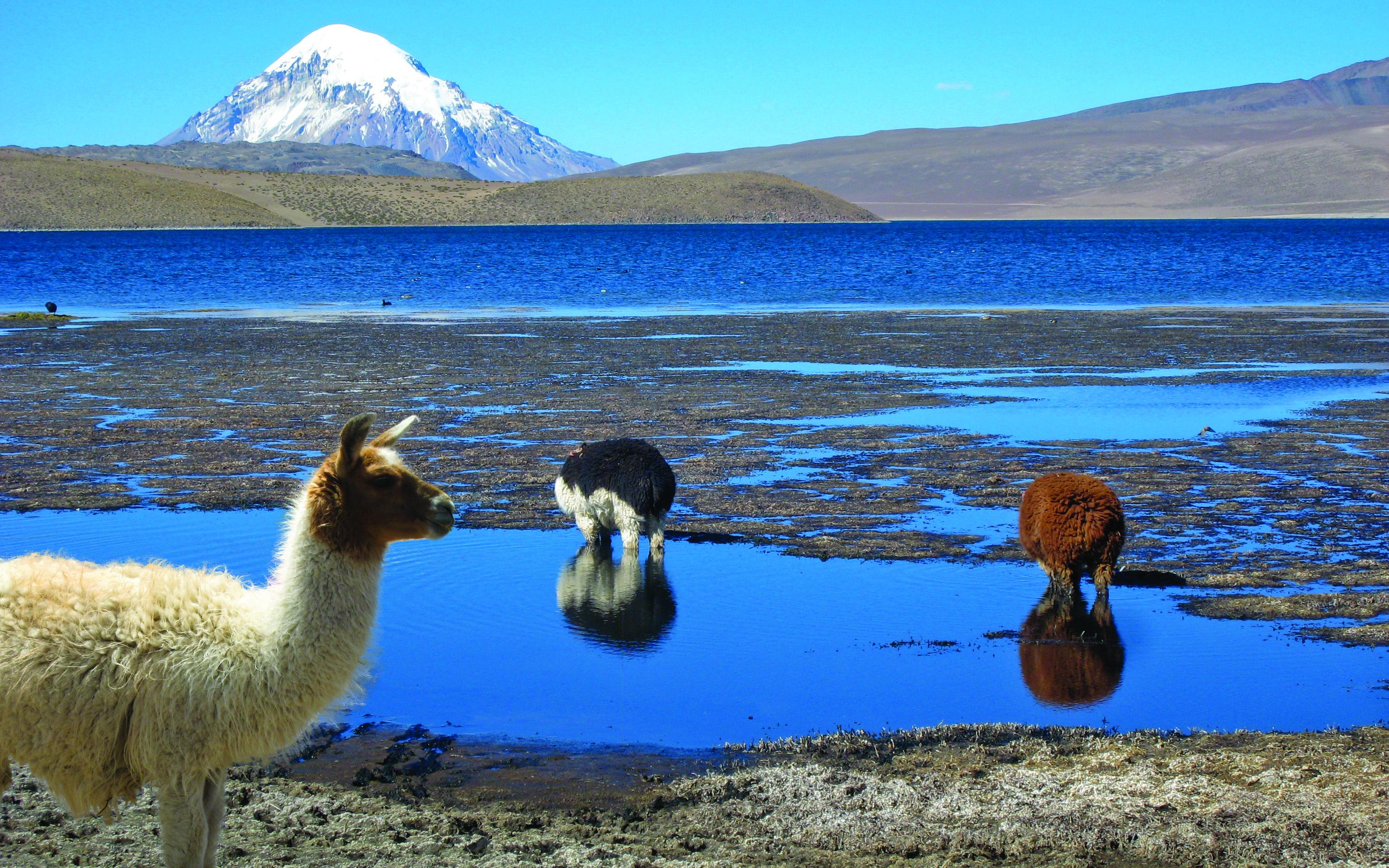 Photo BOLIVIE CHILI